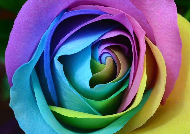 Gumption 'n Rose
