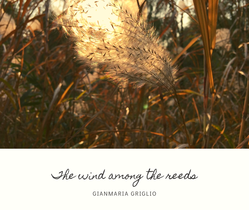 The wind among the reeds [audio]